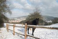 Winterbilder_21