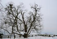 Winterbilder_23